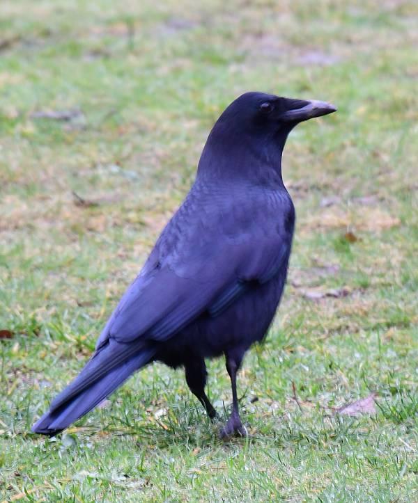 crow byrne creek burnaby bc