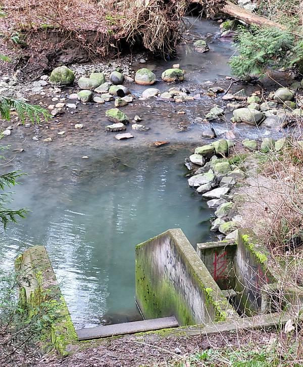 milky byrne creek burnaby bc