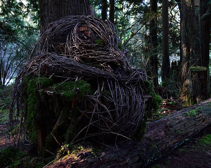 nickie lewis robert burnaby park forest sculptures