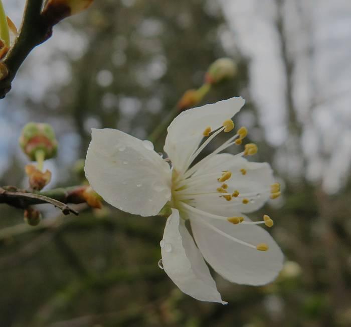 blossom burnaby bc