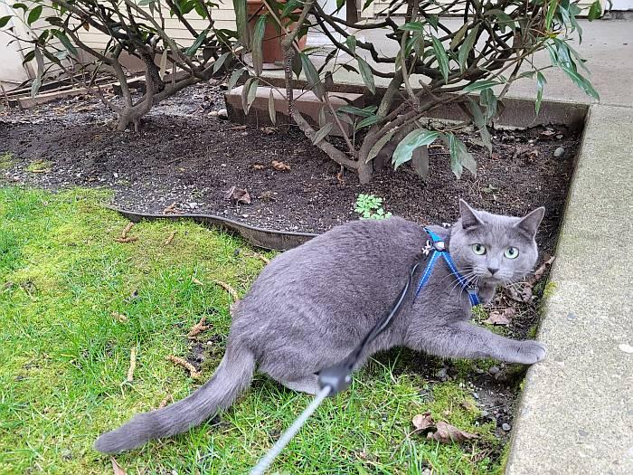 sora cat harness leash