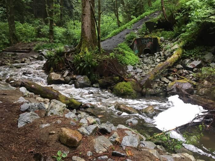 coho smolt kill byrne creek burnaby bc