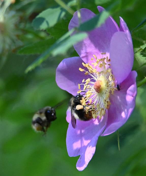 bees burnaby bc