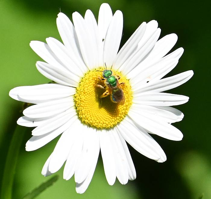 green fly burnaby bc