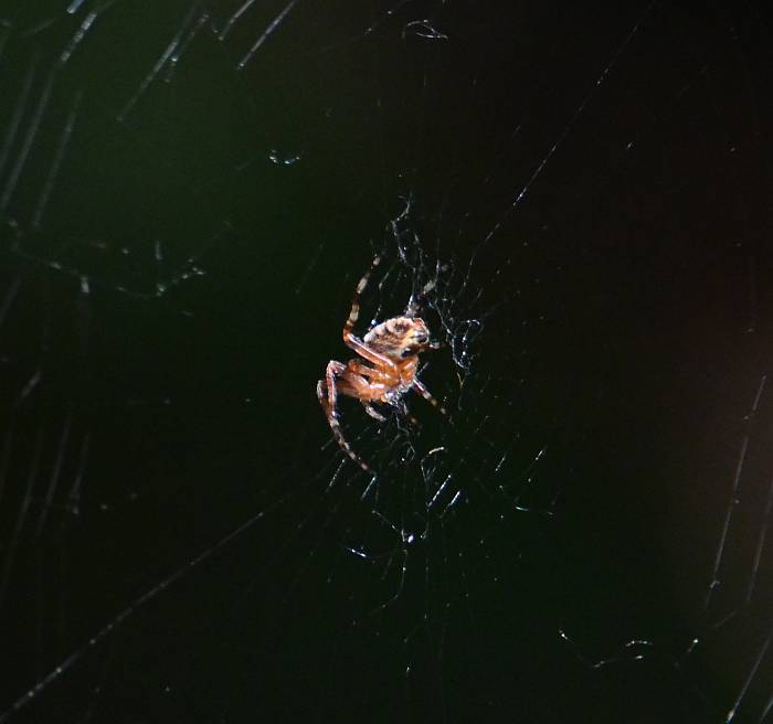 spider burnaby bc