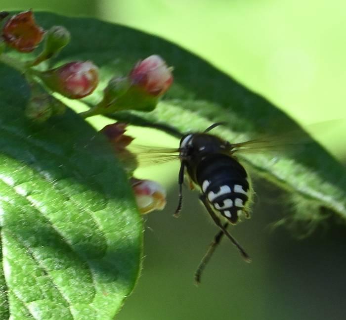 wasp burnaby bc
