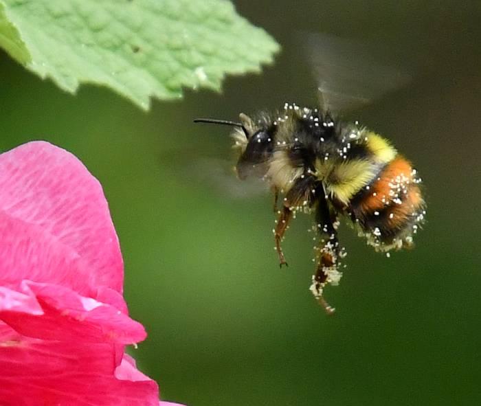 bees surrey bc