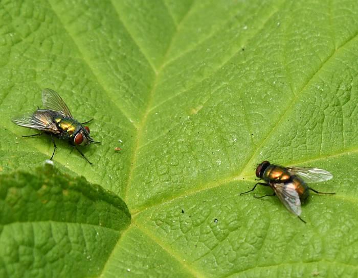 flies surrey bc