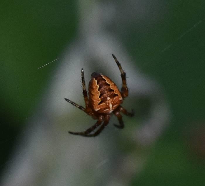 spider byrne creek burnaby bc