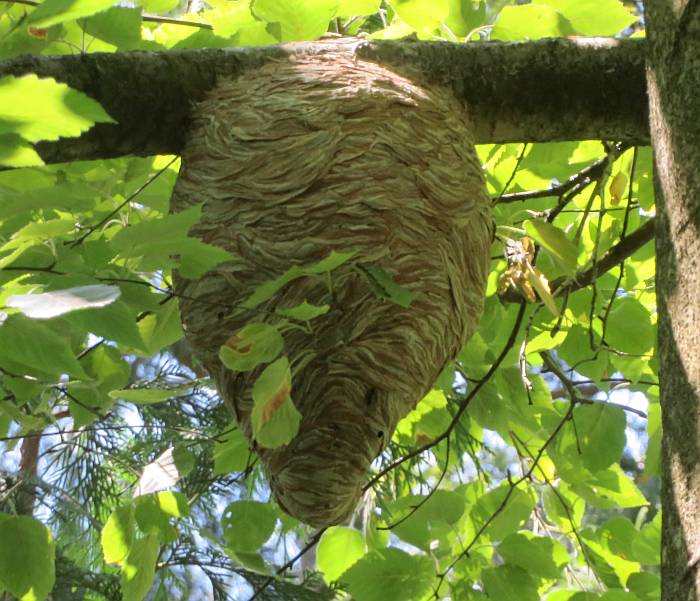 wasp's nest burnaby bc