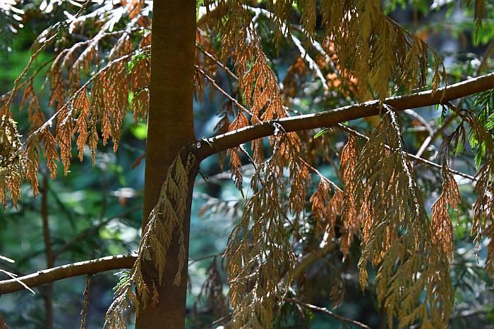 dry foliage byrne creek burnaby bc