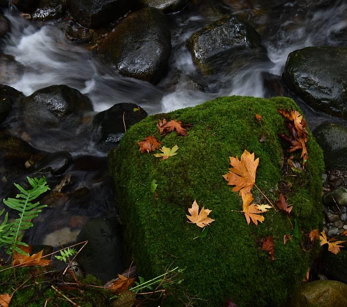 autumn colors motion blur byrne creek burnaby bc