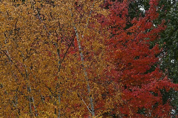 fall colors burnaby bc