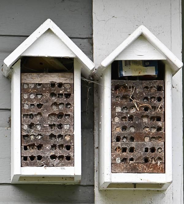 mason bee boxes surrey bc